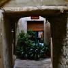 Cal Canosa, la botiga